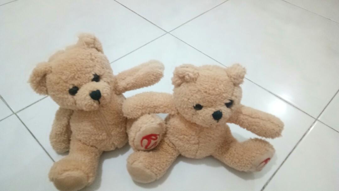 Bear twin
