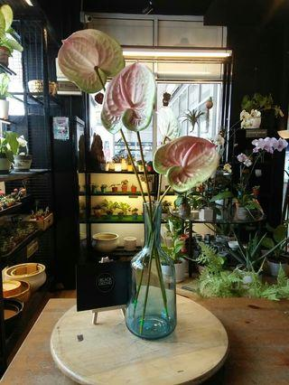 Artificial anthuriums flowers with stylish glass vase