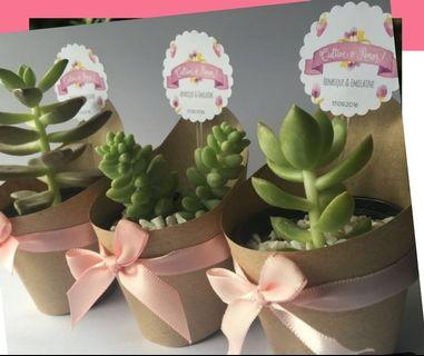 Homemade Succulents with Tagged