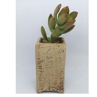 多肉植物 succulent to