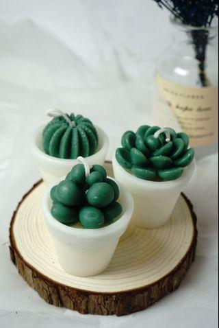 🚚 Cactus candle Workshop / customised candle