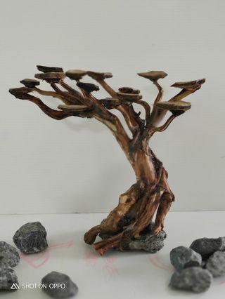 Bonsai tree wood for aquarium aquascape for sale