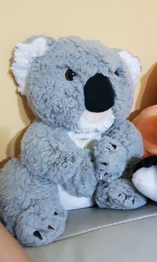🚚 Koala bear from Sydney