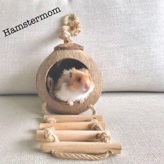 Syrian Hamster Coconut Hideout Natural Theme House