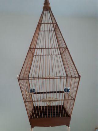 Jambul  tengah cage