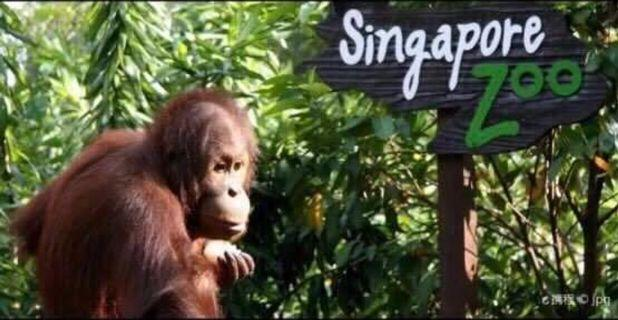 🚚 Singapore zoo physical ticket