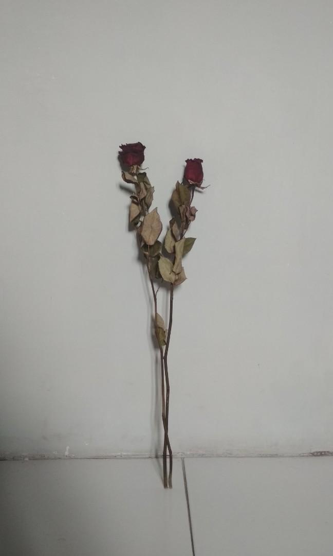 75+ Gambar Bunga Mawar Kering Paling Baru
