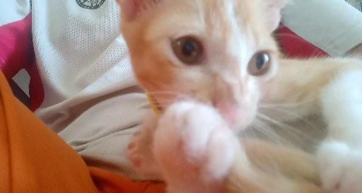 🚚 Cute cat