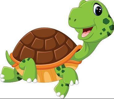 Free Turtle+food