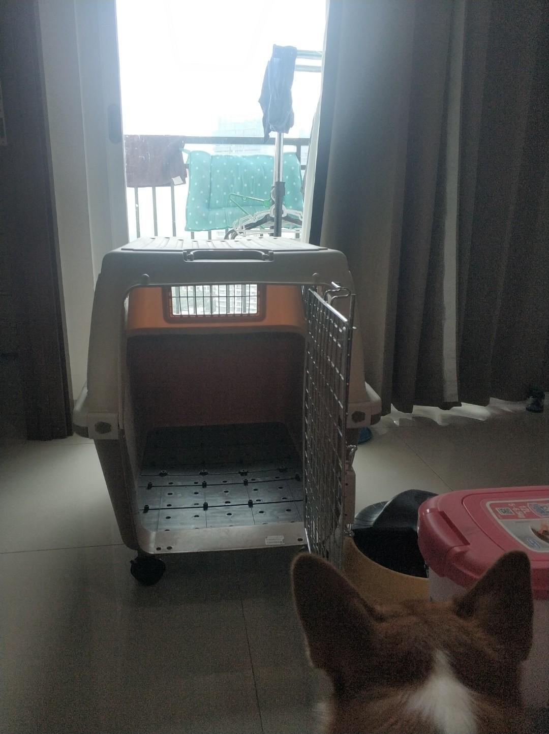 kandang anjing kucing pet carrier cargo