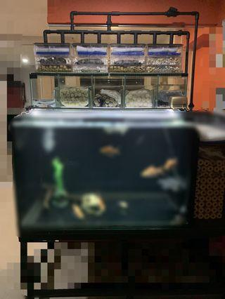 🚚 N30 fish tank (price revised)