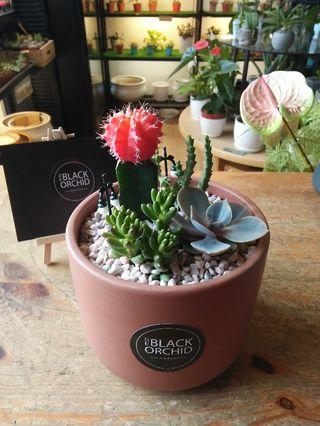 Succulent plants mixed cactus indoor real live with vase