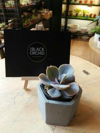 Succulent mini indoor real live plant with muji style vase
