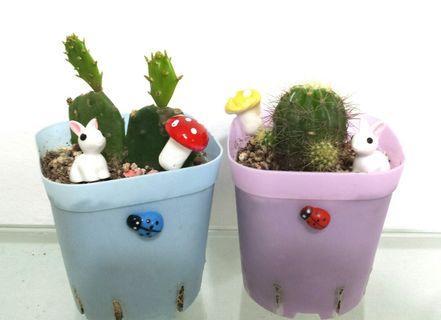 Cactus succulent plant garden flower pot ladybird perlite soil sand gift to friends Teacher's Day Children Birthday