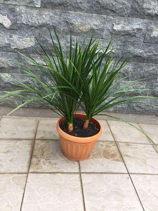 1 pot of lovely plants