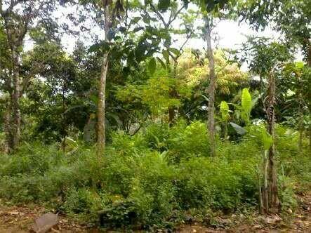 Jual tanah 2 hektar