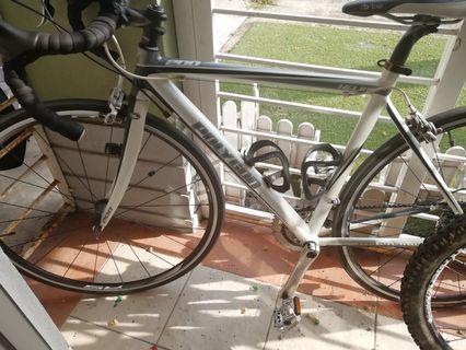 Road Bike Polygon 200 Helios