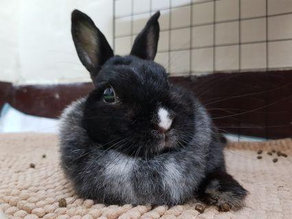 兔兔的可愛
