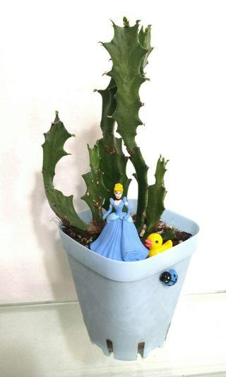 Cactus Fan Shape succulent plant garden collection tall A gift that lasts Teacher's Day Children's Day Birthday