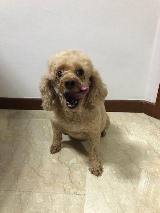 🚚 Dog Adoption