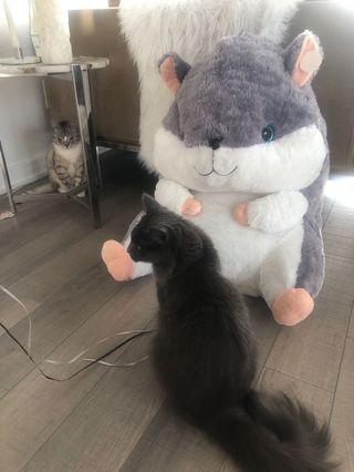 Big hamster