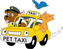 🌟BEST PRICE 🌟 Pet Taxi 🚕 Experienced Driver ,Grab Pet Certified ✅