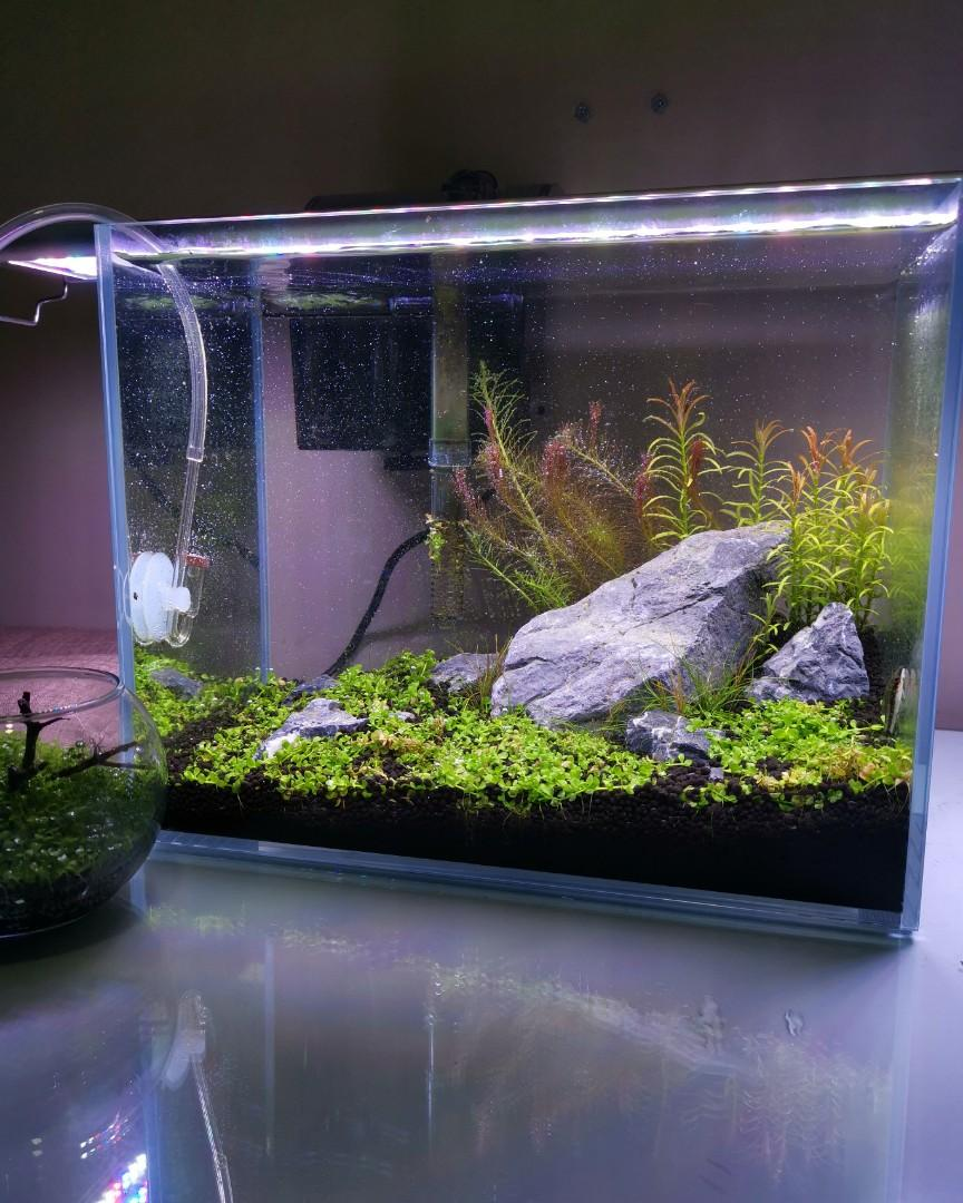 Small Tank Aquascape - Aquascape Ideas