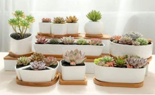 Succulent Ceramic Pot with tray