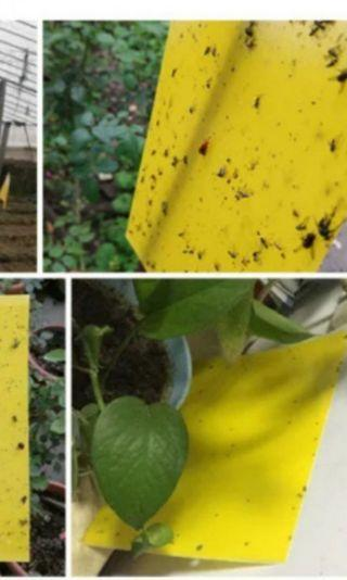 BN Sticky Insects Tape Washable