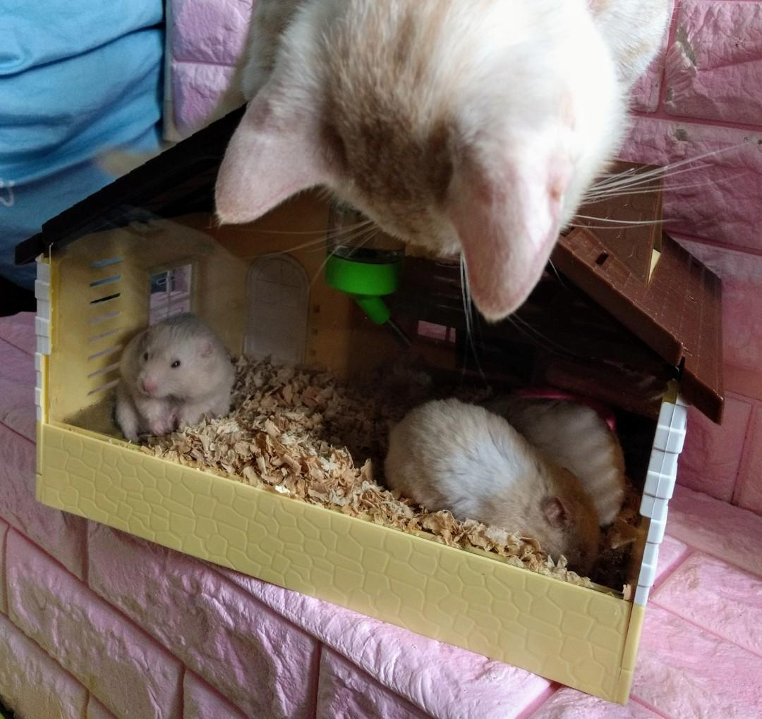 非賣展示日產珍藏級鼠籠(科普)