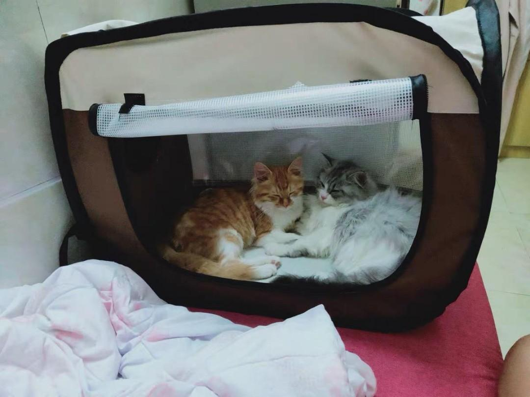 Pet Drying Tent House