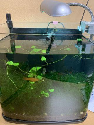 Fish Tank and full set offer 2days