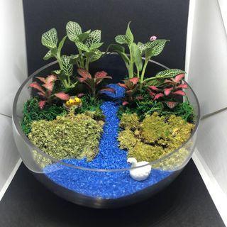 🚚 Fittonia Succulent (T67)