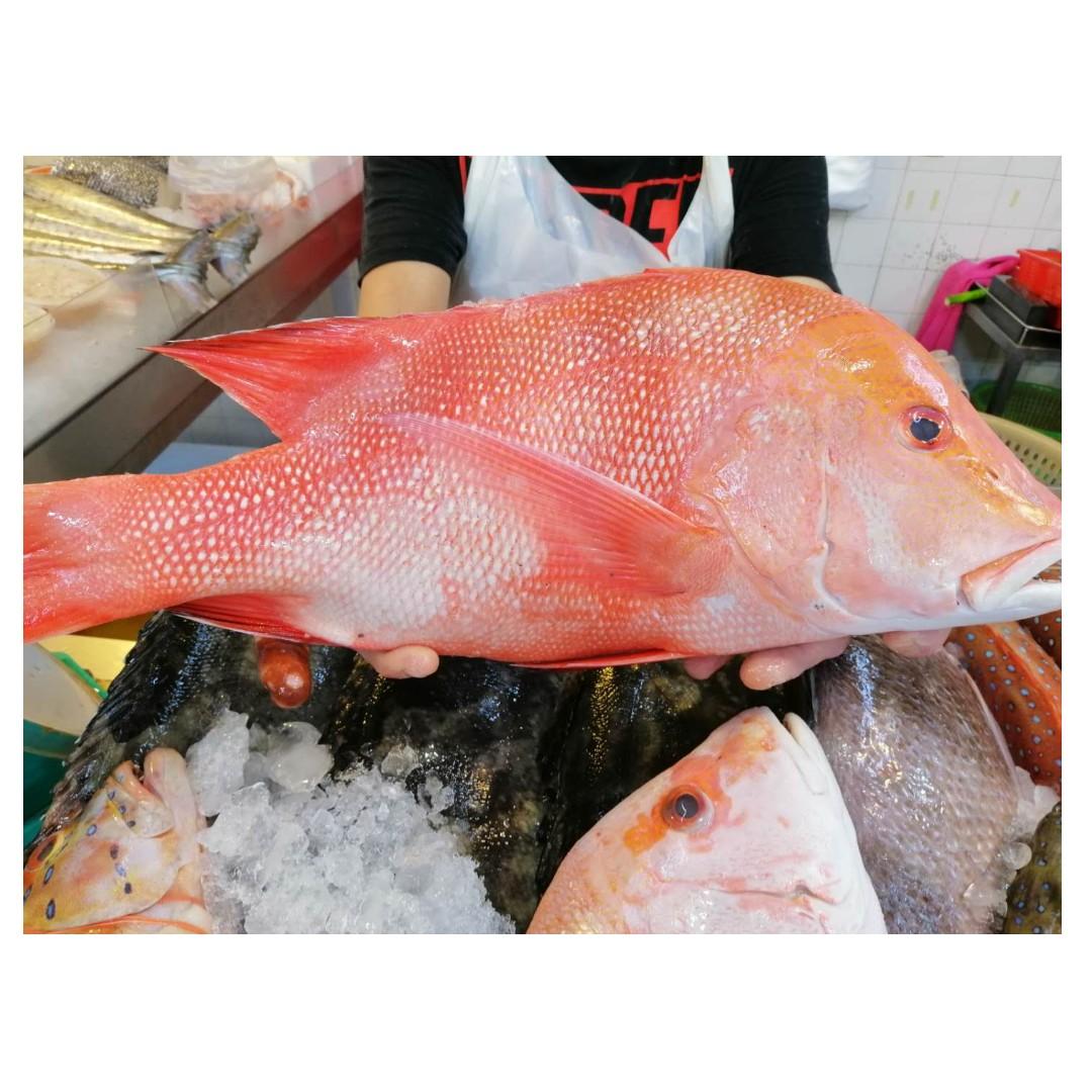 Emperor Red Snapper (红狮) PER KG Whole Fish