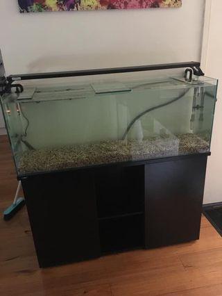 4ft tank set up