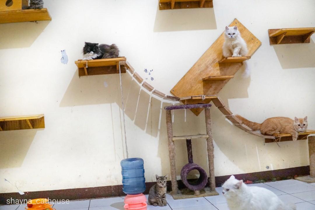 Penitipan kucing bintaro