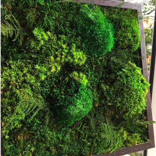 Handmade 3D Moss Art Wall ~ REAL Preserved Moss Green