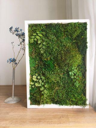 Moss Art Decor ~ Wall Real Preserved Moss Green Moment