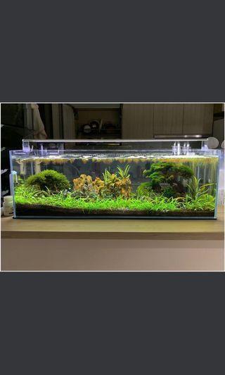 🚚 Aquatic Low tech carpet plant(dwarf sagittaria subulata)