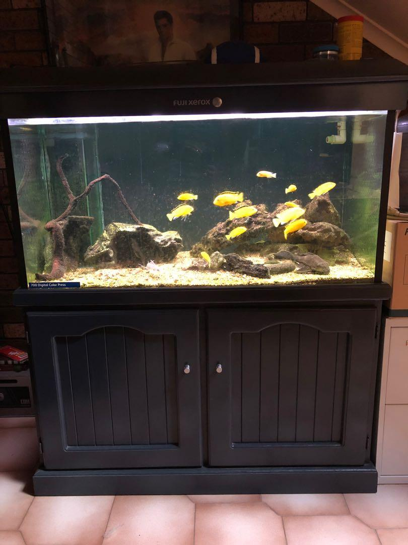 Fish tank 4 foot x 2 foot x2 foot with cabinet and mini reef