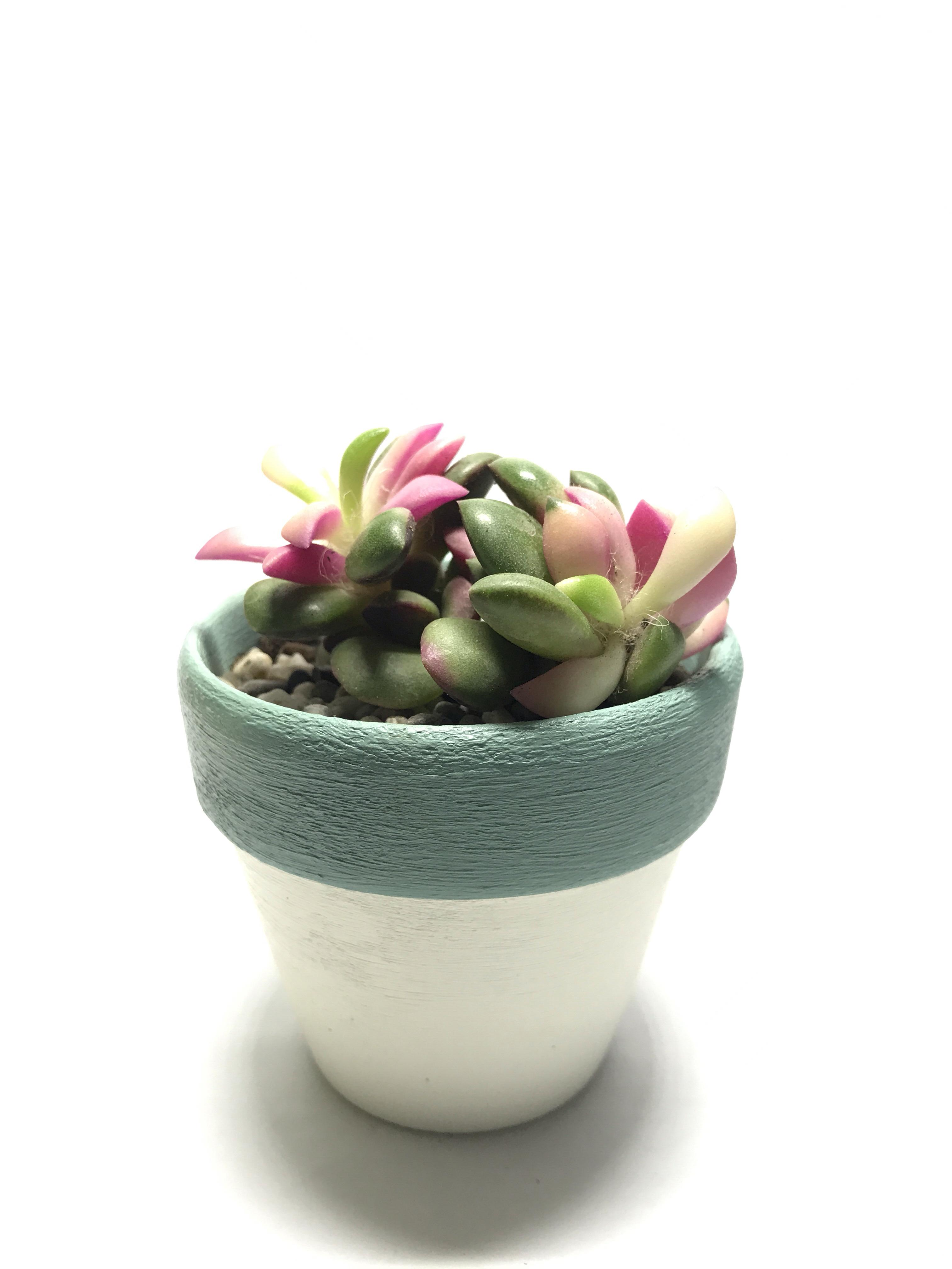Rainbow Sand Rose in Handpainted Pot