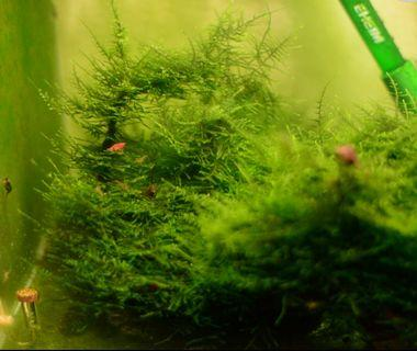 Xmas moss with wood
