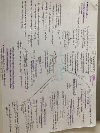 H2 Biology handwritten notes