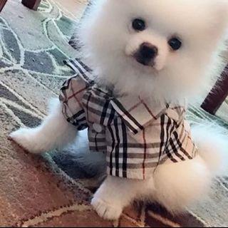 Pet Cloth Cat Dog Cloth Burberry Shirt PC101