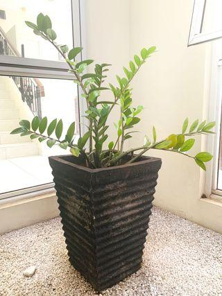 Pot with indoor plant