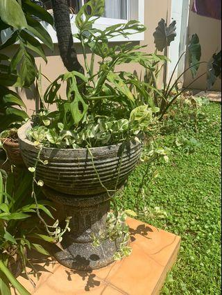 Pot/stand with decorative plants
