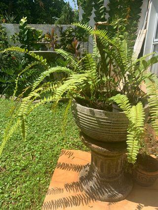 Pot/stand with Fern