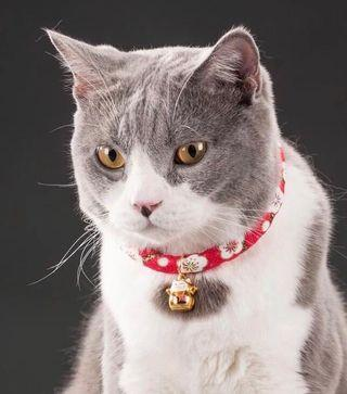 Cat Collar Japanese Style with Fortune Cat Bell PC002
