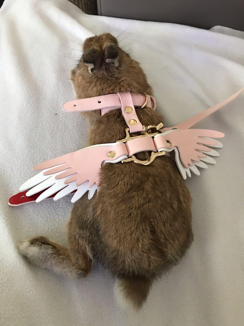 Rabbit Angel Wings Harness Cats Dogs Collar Leash Feathers