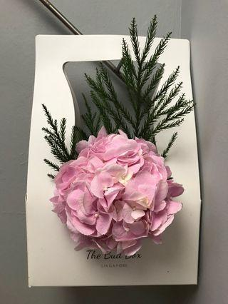 PINK Hydrangea bloombox